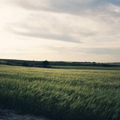 Territorio murgiano