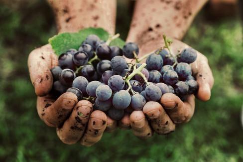 Olio, vino e prodotti enogastronomici